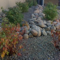 Plantings and Rock Gardens </br> Lawncare and Landscaping